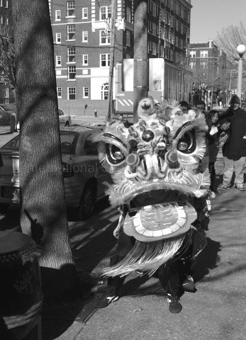 2003 lion dance in the central west end